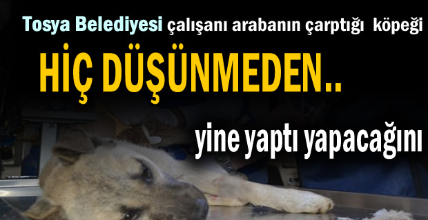 Tosya Belediyesi Personeli Yaralı köpeği alarak Kastamonuya tedaviye götürdü