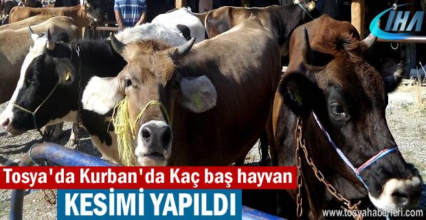 Tosya'da Kurbanda Kaç baş hayvan Kesildi
