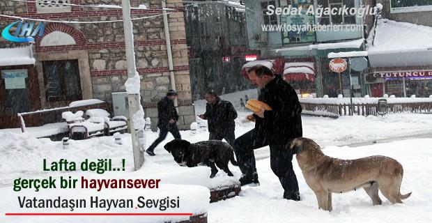 Tosya'da Vatandaş Soğukta aç kalan sokak köpeklerini elleri ile besliyor