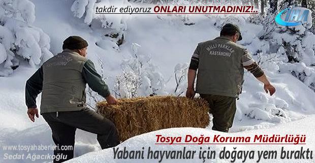 Tosya'da Yaban Hayvanları Yemleme çalışmalarına hız verildi