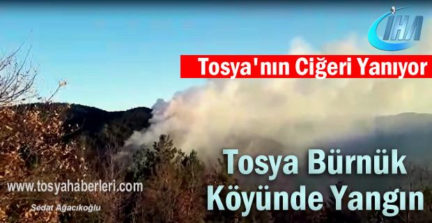 Tosya Bürnük Köyü Orman Yangın ( SON DAKİKA-VİDEO HABER )