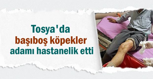 Tosya'da Köpeklerin saldırdığı adam hastanelik oldu
