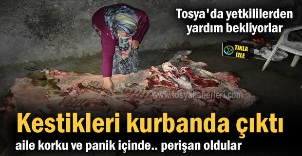 Kastamonu'nun Tosya ilçesinde bir ailenin kestiği kurbanlık hayvanın