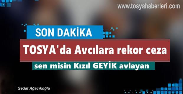 TOSYA'DA KAÇAK GEYİK AVCILARINA REKOR CEZA