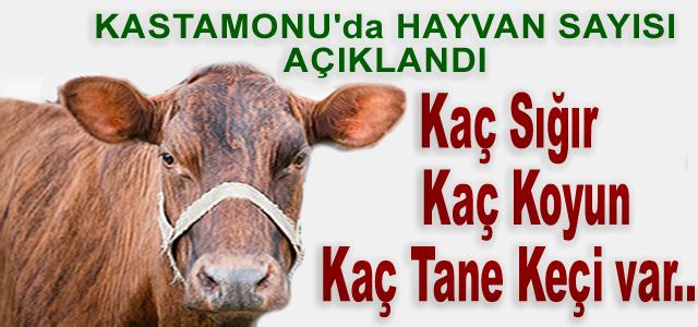 Kastamonu'da Sığır Sayısı Açıklandı