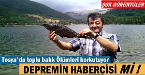 Tosya Kösen çayırı göletinde toplu balık ölümleri korkutuyor