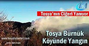 Tosya Bürnük Köyü Orman Yangın...