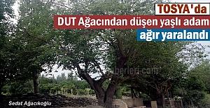 Tosya'da Dut ağacından düşen adam ağır yaralandı