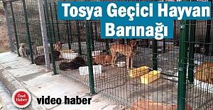 Tosya Belediyesi Geçici Hayvan Barınağı...