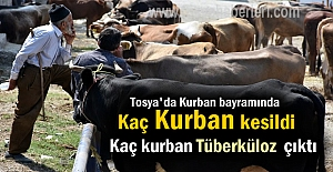 Tosya'da Kurban Bayramında Kaç Kurban Kesildi