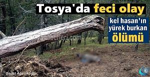 Tosyada kestiği ağaç üstüne...