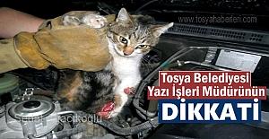 Tosya'da Araç motoruna sıkışan üç yavru kedi Müdürün dikkati ile kurtuldu