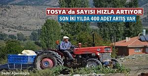 TOSYA#039;DA SAYISI HIZLA ARTIYOR