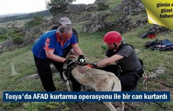 Tosya Çepni Köyünde Mahsur kalan Köpek AFAD tarafından kurtarıldı