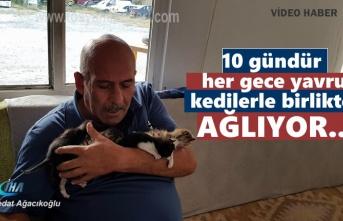 Tosya'da Hurdalıkta araçların içinde bulduğu 5 yavru kediyi eli ile besliyor