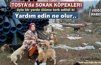 Tosya'da Sokak Köpekleri Açlığa Terk Edildi