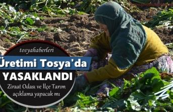 Tosya'da Patates Ekimi Yasaklandımı