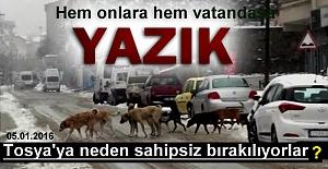 TOSYA'YA KÖPEKLER SAHİPSİZ BIRAKILYOR