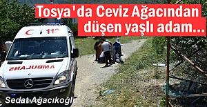 Tosya'da yaşlı adam Cevizden düştü