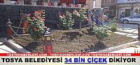 Tosya'da 34 Bin Çiçek Dikiliyor