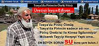 TOSYA'DA PİRİNÇ ÜRETİCİSİ KAN AĞLIYOR