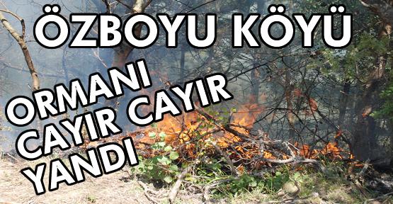 Tosya Özboyu Köyünde Orman Yangını