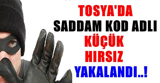 Tosya'da Küçük Hırsız '' SADDAM '' Yakalandı