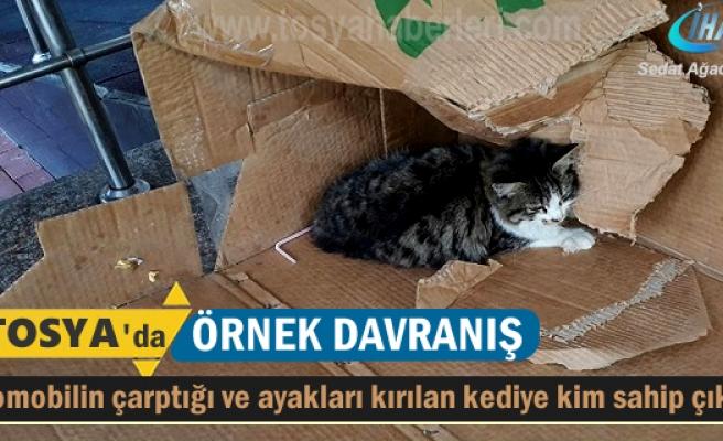 Tosya'da Ayakları kırılan yaralı kediye bakın kim sahip çıktı