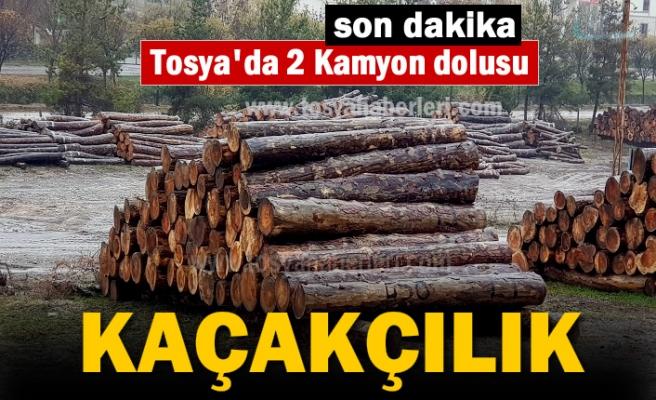 Tosya'da Kaçak Kesim yapılmış 2 Kamyon Tomruk Yakalandı