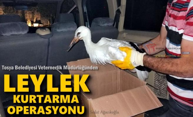 Tosya'da Leylek Kurtarma Operasyonu
