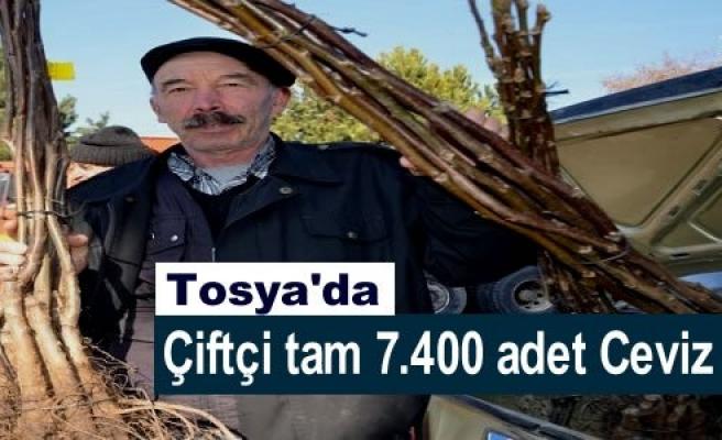 TOSYA'DA ÇİFTÇİYE 7.400 ADET CEVİZ DAĞITILDI