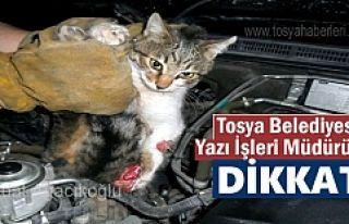 Tosya'da Araç motoruna sıkışan üç yavru...