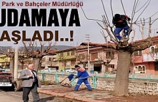 Tosya Belediyesi Budamaya Start verdi