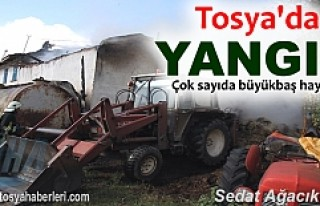 TOSYA'DA BESİ DAMINDA YANGIN MEYDANA GELDİ