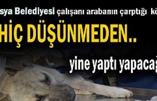 Tosya Belediyesi Personeli Yaralı köpeği alarak...