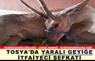 ŞARAMPOLDE YARALI GEYİK BULUNDU