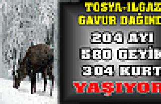 Tosya Gavur Dağı Yaban Hayvan sayısı Belli Oldu