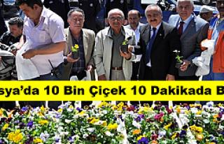 Tosya'da 10 Bin Çiçek 10 Dakikada Bitti