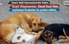 Tosya'da Kedi ile Köpeğin Dostluğu görenleri hayrete düşürüyor