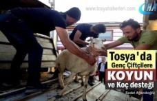 Tosya'da Genç Çiftçilere 96 Koyun 6 Koç Dağıtıldı