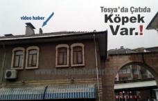 Tosya'da Kasap Arastasında Çatıda Mahsur Kalan Köpeği İtfaiye Kurtardı