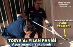 Tosya'da Bir Apartmanda Yılan Yakalandı