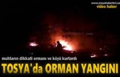 Tosya Gökceöz Köyü Orman Yangını