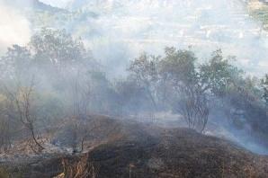 Tosya Toki Çevresinde Yangın