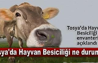TOSYA'NIN BÜYÜKBAŞ ENVANTERİ AÇIKLANDI