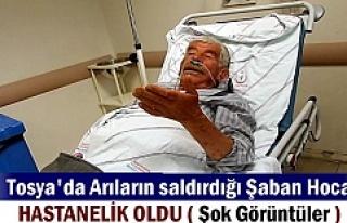 TOSYADA ARILARIN SALDIRDIĞI YAŞLI ÇİFT HASTANELİK...