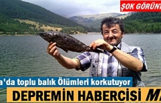 Tosya Kösen çayırı göletinde toplu balık ölümleri...