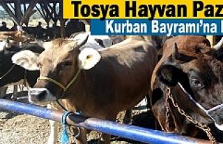 Tosya Hayvan Pazarı Kurban Bayramına Hazır