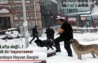 Tosya'da Vatandaş Soğukta aç kalan sokak köpeklerini...