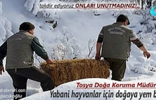 Tosya'da Yaban Hayvanları Yemleme çalışmalarına...